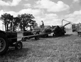Bringing in the harvest - Farm of Prof. M.W. Staples near Arkell