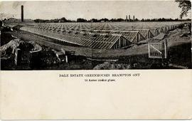 Dale's Estate Greenhouses, Brampton Ont. 14 acres under glass